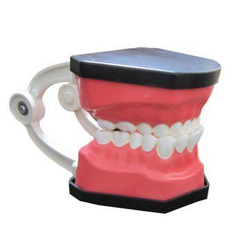 دندان 1