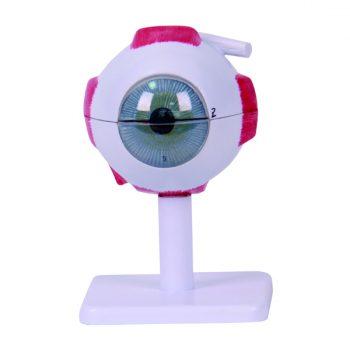 کره چشم سه برابر اندازه طبیعی